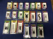 DeAgostini Encased REAL BUG / Bugs / Insects NEW in PACK w/ Collector Card Mega