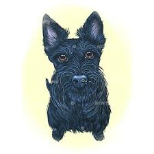 Scottish Terrier Print Scottie Dog Breed Art 4x6 5x7 8x10 Matted Ready To Frame