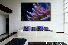 Purple Coral Close Up Macro Giclee Art Canvas Fine Print Home Wall Decor