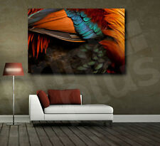 Rooster Feathers Abstract Canvas Fine Art Poster Print Home Wall Decor