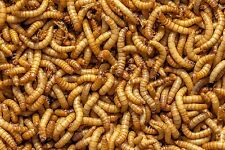 FREEZE DRIED MEALWORMS,Cichlid,Oscar,Carnivor,Turtle,Reptile,Fish,Bird,2 1/2 LB.