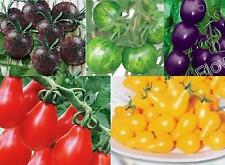 20/100/200 Lot Variety Special Rare Organic Vegetable Tomato Seed Cherry 5Color.