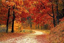 Autumn Path through Forest trees Large Canvas Picture Wall Art