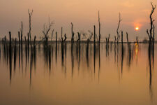 Drowned Forest by Piet Haaksma Landscape Print