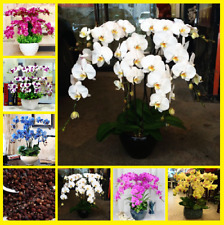 100Pcs Colorful Orchid Phalaenopsis Flower Seeds Home Garden Multi-Color Mix NEW