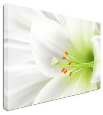 Large White Lilly Green Heart Flowers Canvas Wall Art Print Any Size