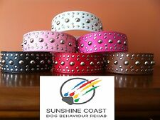 LEATHER DOG COLLAR STUD / STUDS / STUDDED - BLACK WHITE RED PINK BROWN HOT PINK