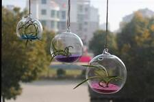 Glass Hanging Plant Terrarium Container Vase Pot Globe Ball Crystal (Only Glass)