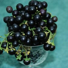 "GARDEN HUCKLEBERRIES ~Black~ ""Solanum Melanicerasum"" ~Great for Pies~ 35+ SEEDS"