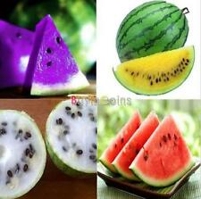 Rare Sweet Watermelon/Strawberry/Dragon/KIWI Fruit Seeds Garden Home Use