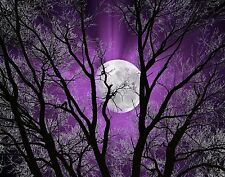 Purple Wall Art Picture/Tree Moon Modern Home Decor Matted Picture