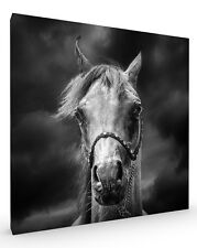 Head in the Clouds, Horse Stretched Canvas ready to hang wall art
