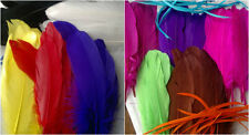 10  Large  Goose Feathers - Approx 5-7 inches
