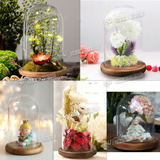 Glass Display Cloche Jar Bell Dome With Wooden Base Or Glass Base Classic DIY