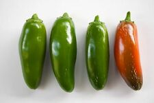 Jalapeno Pepper Seeds, HOT PEPPER, NON-GMO, JALAPENO POPPERS! (Free Shipping)