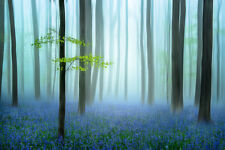 The Blue Forest by Piet Haaksama Landscape