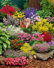 Colorful 200pcs NON-GMO Perennial Wildflower Mix Seeds Heirloom Garden K002