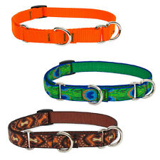 "Lupine Martingale Combo Collars 3/4"" Width Made in the USA Lifetime Guaranteed"