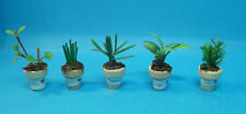 12th scale dolls house miniature selection of potted herbs 5 to choose from.