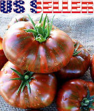 50+ ORGANIC Chocolate Stripes Tomato Seeds Heirloom NON-GMO RARE Delicious