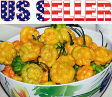 30+ ORGANIC Scotch Bonnet Jamaican Hot Yellow Pepper Seeds Heirloom NON-GMO