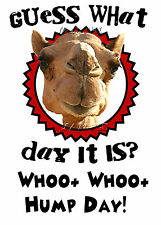 Hump Day Camel -Geico Commercial Camel - Guess what day it is? Wednesday T Shirt
