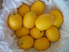 """Artificial Lemons 6, 8, or 12, Realistic Decorative Faux Fake Large 3"""", Staging"""