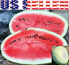 20+ GIANT Ali Baba Watermelon Seeds Heirloom NON-GMO Sugar Sweet 15-30 LB RARE