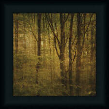 Fog in Mountain Trees Number 2 Dense Forest Framed Art Print Picture 12x12