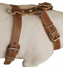 """Genuine Leather Dog Harness 25""""-30"""" chest, for Medium and Large Dogs"""
