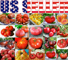 30+ ORGANICALLY GROWN GIANT Tomato Seeds Mix 22 Varieties Heirloom NON-GMO USA