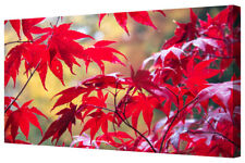 Vivid Autumn Forest Crisp Red Leaves Cotton Canvas Wall Art Picture Framed Print