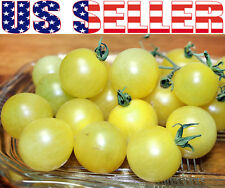 30+ ORGANICALLY GROWN Snow White Cherry Tomato  Seeds Heirloom NON-GMO Sweet
