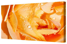 Vivid Orange Rose LARGE Floral Framed Canvas Art Picture Print Flower Shades A1