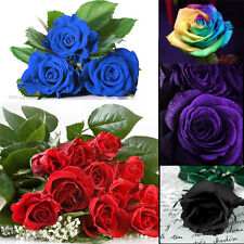 100PC Multi-color Flower Plant Seed Holland Rose Seed Lover Gift Garden Decor cn