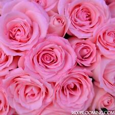 Fresh Cut Pink Roses, Flower Delivery, Bouquet-Event-Party-DIY-Bulk (12 or 24ct)