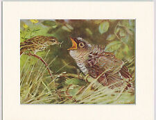 Meadow-Pipit Feeding Young Cuckoo Mounted 1930s Bird Print Black Cream or White