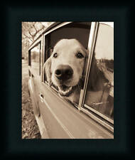 Are We There Yet Golden Retriever Car Ride Framed Art Print Wall Décor Picture