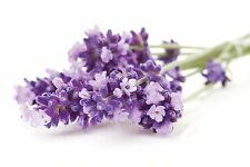 Quality LAVENDER Candle Making Fragrance Oil quantites 30ml 50ml or 100ml
