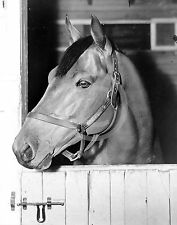 1938 SEABISCUIT KENTUCKY DERBY HORSE RACEHORSE PHOTO