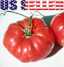 30+ German Pink Tomato Seeds Sweet Heirloom NON-GMO RARE Low Acid INDETERMINATE