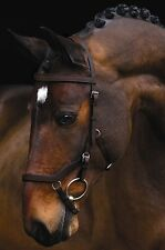 Rambo Micklem Comp Bridle With Reins FEI Approved SBAC9D