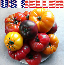 30+ ORGANIC Deluxe Tomato Seeds Mix 18 Varieties Giant Heirloom NON-GMO Tasty!!