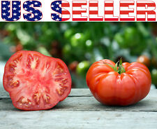 50+ ORGANICALLY GROWN GIANT Beefsteak Tomato Seeds Heirloom NON-GMO Productive