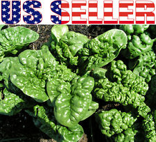 100+ ORGANICALLY GROWN Bloomsdale Spinach Seeds Heirloom NON-GMO Dependable USA