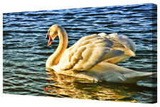 Lovely White Swan Deep Blue Lake LARGE New Animal Canvas Print Wall Art Picture