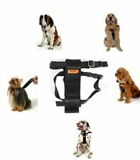 RAC 2 in 1 Car Safety Seatbelt & Dog Walking Harness - S M Dogs Puppies
