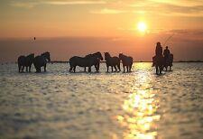Mustang Herd At Sunset - Horse Poster - Equine Animal Print - Horse Photo Art
