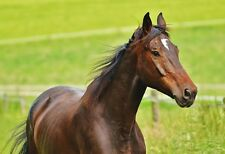 Kentucky Thoroughbred Horse In A Pasture - Animal Poster Print - Horse Photo Art