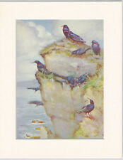 Choughs Mounted 1930s Bird Print Black Cream or White Mounts